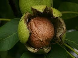omega 3 nueces